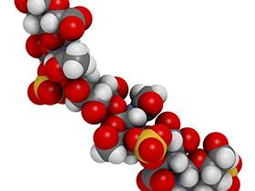 コンドロイチン硫酸