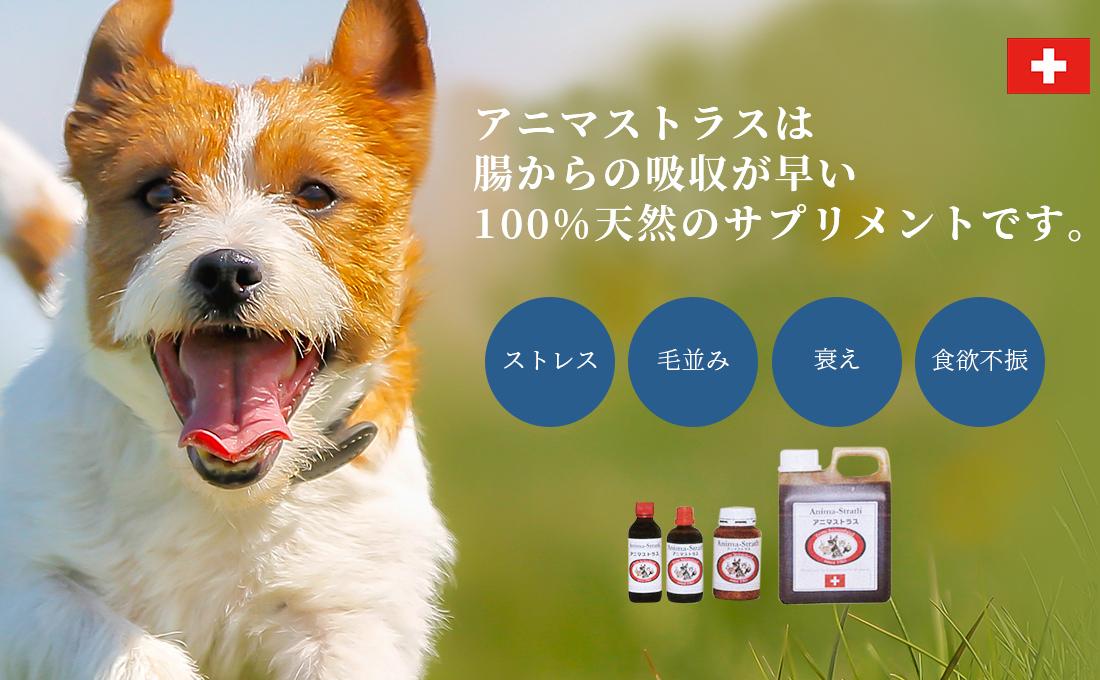 アニマトラスは腸からの吸収が早い100%天然のサプリメントです。